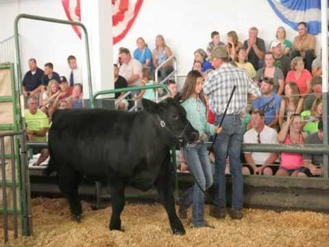 Douglas County Beef Auction August 7, 2015