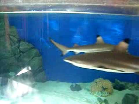 Southport Sharks Club Fish Tank