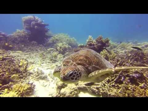 Scuba diving in Cairns - The Great Barrier Reef