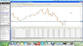 Forex watchers trader program