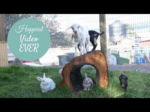 Happiest Video EVER!
