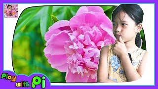 Learn Flower Name in English for Kids Videos Educational