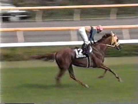 青嶋達也 競馬実況詰め合わせ1999年
