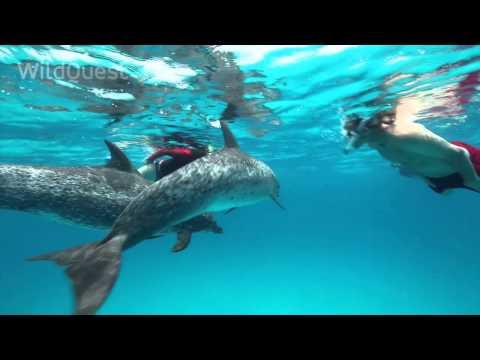 Dolphin Tales 2/2014 - Wild Dolphin Swims