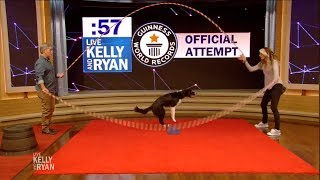 Rocky the Dog Attempts Double Dutch Guinness World Record