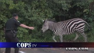 In Hot Pursuit, Wildest COPS Chases, COPS TV Show