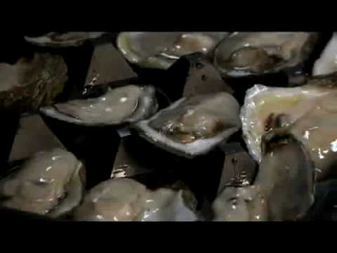 Oil Spill Disaster 2010 (part166) - Problems on the Half Shell