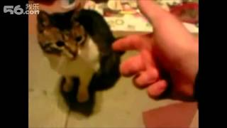 Cute Animals Fake Death Collection Funny