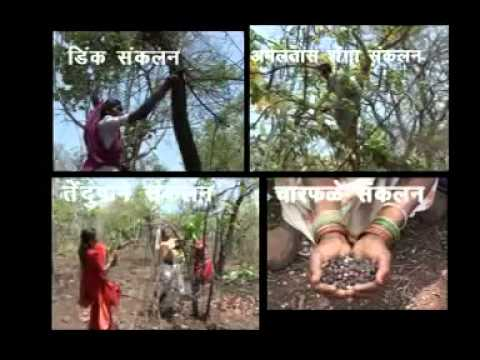 Maharashtra Forest Dept   Joint Forest Mgmt Jingle