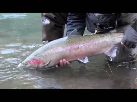 Winter Steelhead Fishing - LeakyWadersFishing
