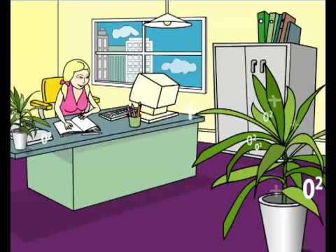 Nasa study air purifying indoor house plants online raj - Enhancing work efficiency home indoor plants ...