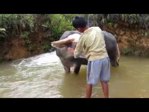 Toraja Sulawesi Indonesia Documentary 2015