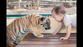 5 Niños que Fueron Criados por Animales 2