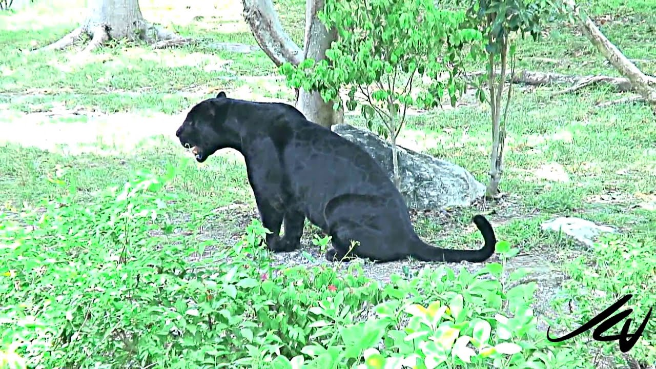 Big Cat Wildlife Sanctuary