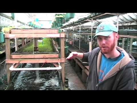 aquaponics system