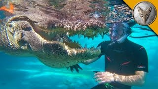 JAWS! Swimming with Gators!