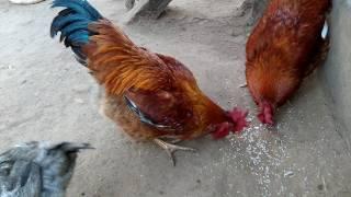 Indian xxx hen scenes