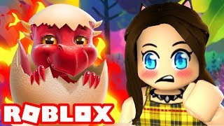 The cutest little dragon in Roblox!
