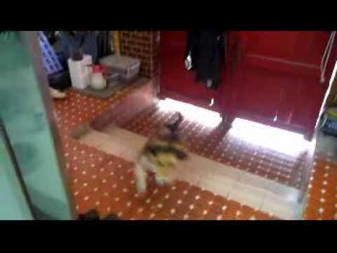 貓美眉冒著被Neo追逐的生命危險跑來我家乞食。