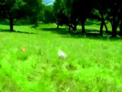 Заяц и лес