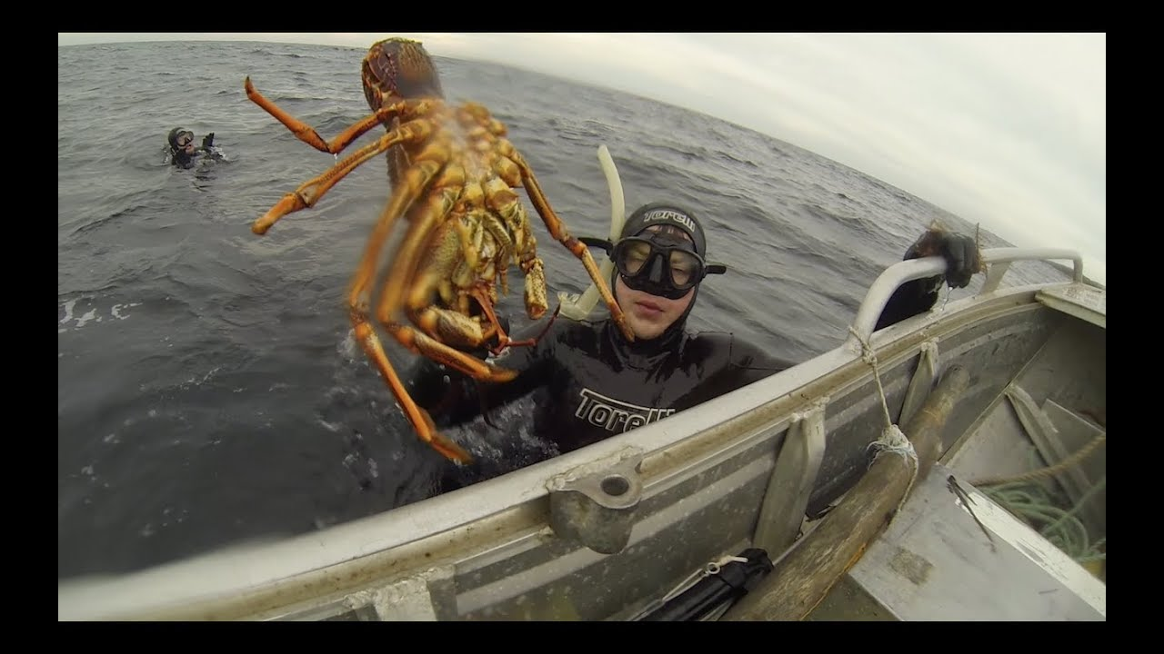 Harvesting Tasmania: Lobsters, Abalone, Sea Monsters! (Breath hold diving) - YouTube