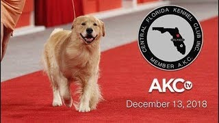 Central Florida Kennel Club AllBreed Show