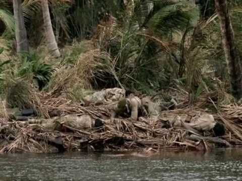 At peleliu from the film peleliu 1944 horror in the pacific