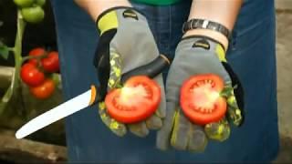 Bandymų stotis: pomidorų veislių naujienos ir burokėlių, salotų sėja ir auginimas | Augink lengviau!