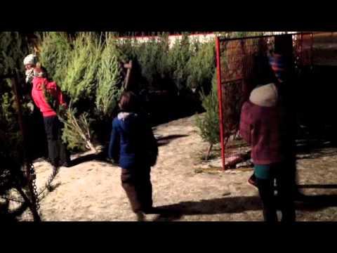 31st Scouts Christmas Tree Lot Fri. Dec. 14, 2012