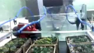 Prototipo de Sistema de Riego Automatizado Para un Invernadero o Vivero