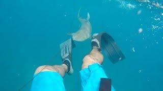 Shark Attacks Spearfisherman || Florida Keys 2017
