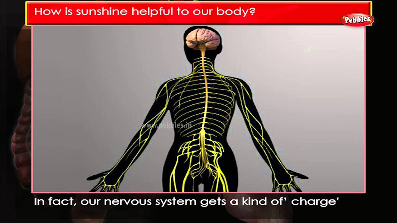 Human body anatomy videos