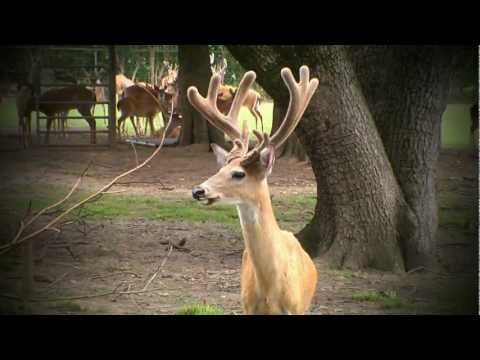 More Whitetails in the Heart of Dixie | Deer & Wildlife Stories