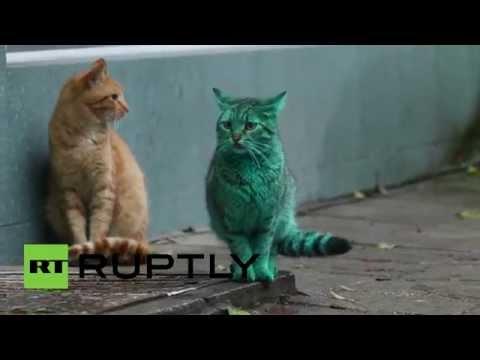 قط أخضر زمردي غريب يظهر في شوارع بلغاريا ويصيب الناس بالدهشة