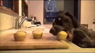 FUNNY VINES COMPILATION   NEW FUNNY ANIMAL VINES AND CLIPS   YouTube Segment 0 x264