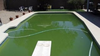 Using Clorox Bleach In Your Swimming Pool