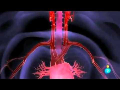 Emociones y corazón.  El campo magnético cardíaco