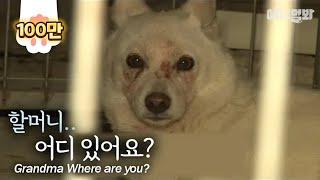 """""""흰둥아 미안해.."""" l Dog Hears The Voice Of Missing Grandma, And She Goes Like.."""