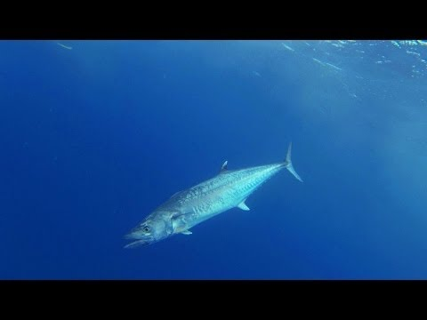 Tuna, Kingfish and Grouper fishing in Key West