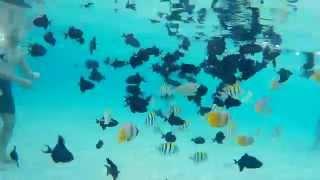 Underwater Pantai Kilo Lima Luwuk Banggai