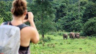 Elephant, Elephant, Elephant!!!  Thailand's Kui Buri National Park - Season 2 Ep41 - S/V Adventurer