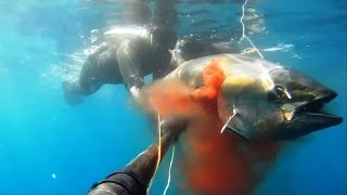 Spearfishing 35 Kg Tuna in Naples Italy with Dario Furgiele - Pescasub Tonno Aspetto