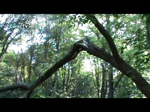 Pomi doborâţi de furtună în Valea Morilor