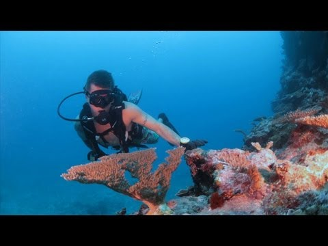 Scuba Diving Samoa 2013, Travel Video Guide