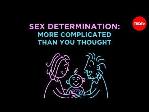 Sex determination: More complicated than you thought - Aaron Reedy