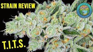 Strain Review: T.I.T.S.