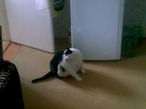 ぽっちゃり猫の悩み。足が・・・届かないんだよぅ