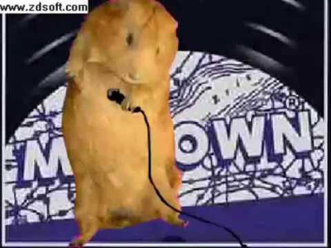 Hamster Dance ( La Danza Del Hamster) video