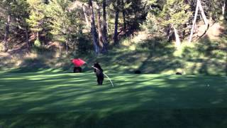 Baby Bear Circus Act on Golf Course
