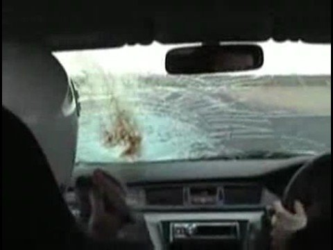 Bird Hits Windshield at 100 MPH - YouTube